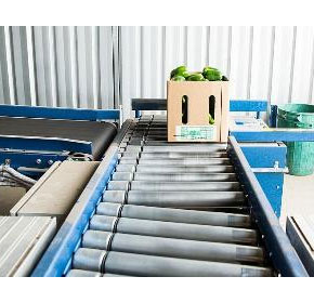 Fruit & Vegetable Roller Conveyor | Adept