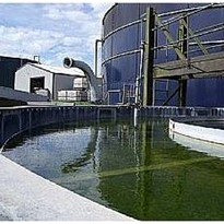 Monitoring Dairy Wastewater