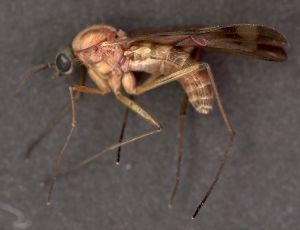 The Tus protein could help detect malaria.