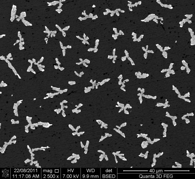 Silicon particles on the surface of an aluminium alloy.