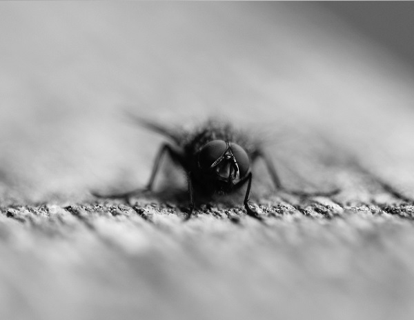 "Seeing the world from a fly's POV: a new camera offers ""exceptionally wide-angle fields of view with zero aberrations and uniform illumination intensity""."