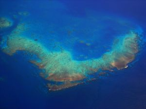 Is climate change killing the Great Barrier Reef or doing nothing at all?