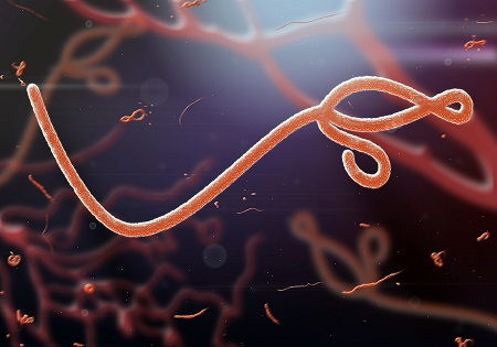 PHAA: Australia needs to respond to the African Ebola outbreak in 'three key ways'.