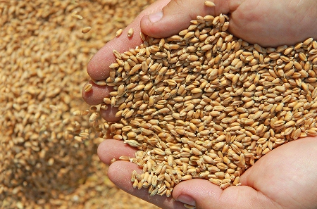 """The code will support our bulk wheat exporters so they can get on with business."""
