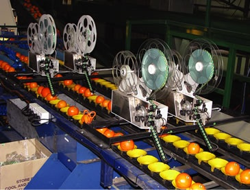 Dix's automatic labelling machines are capable of labelling a wide variety of fruit and vegetables.