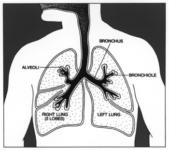 Idiopathic Pulmonary Fibrosis (IPF) is a progressive and currently incurable disease characterised by the buildup of fibrous scar tissue within the lungs.