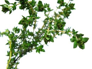 A herbal treatment for acne would be very welcome news - particularly for acne sufferers who experience skin sensitivity. ""