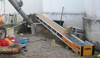 Conveyors move grain into a collection hopper and on to an incline auger.