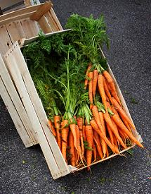 Calcium-rich carrots are just one of an array of GM superfoods.