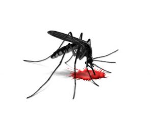 Dengue fever is a mosquito-borne viral  disease, which is now present in all tropical and sub-tropical regions of the world.
