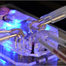 Organs-on-Chips: invention of micro-device that mimics organ function