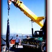Crane Hire - IndustrySearch Australia