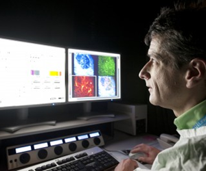 Associate Professor Michael Hickey examining microscopic images of leukocytes travelling through kidneys.