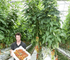 Hydroponic tomato grower Nathan Wilson.