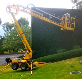 Tree & Hedge Trimming