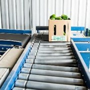 Adept Roller Conveyor for Crops