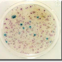 Compact Dry EC | E. coli and Coliforms