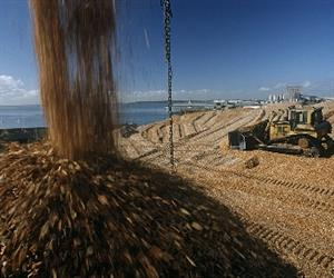 The fall in woodchip exports reflects the competitive conditions in global woodchip markets.