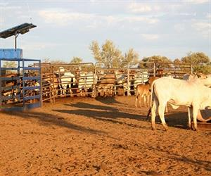 The Precision Pastoral Management System (PPMS) uses advanced technologies to monitor and analyse the performance and condition of individual cattle and the pasture they are grazing on remotely, and without labour input.