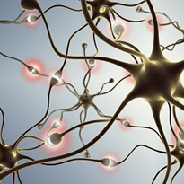 New neurons 'could' be cure for Parkinson's