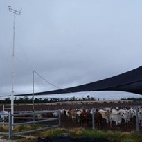 Weather monitoring stations used to optimise feedlot productivity