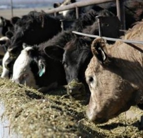 Effectively monitoring the wellbeing of livestock