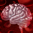 Stress research confirms blood-brain comparison 'valid'