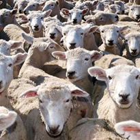 How would a livestock standstill affect your business?