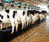 """Dairy processors are looking for ways to manage future risks."""