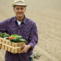 "Aust vegetable growers struggle in ""challenging environment"""