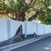 Tree's a crowd - A residential project at Rose Bay, NSW
