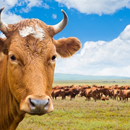 World meat prospects 'challenging, but positive'