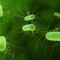 Bacteria 'more resistant' to last-line antibiotics