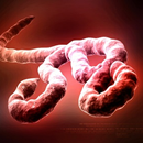 Aust displayed 'world class' preparedness to Ebola scare