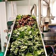 Wiley, OneHarvest join forces for super-size fresh salad facility