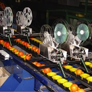 Fruit labelling machines