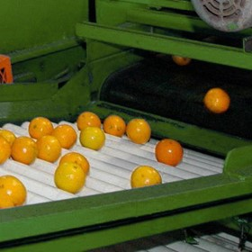 Mandarin Picker and Processor