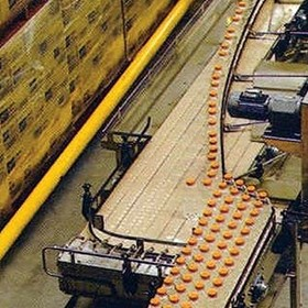 Single Filer Conveyors