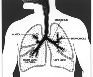 Lung cancer is the commonest cause of cancer-related death in Australia.