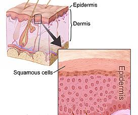 There are more bacteria living on our skin and in our gut than cells in our body.