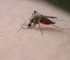 Malaria affects more than 200 million people worldwide, causing nearly 800,000 deaths per year, mostly young children under five.