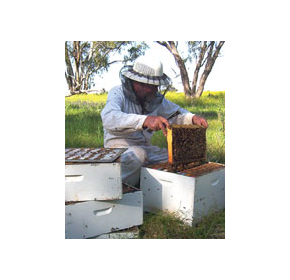 Capilano Honey beekeepers