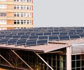 Government should back one renewable energy solution - solar.