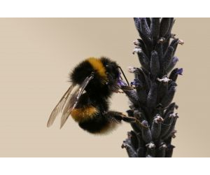 Lessons to learn: Bee research is helping improve machine vision technology.