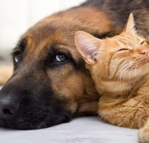 5 ways pets improve health outcomes
