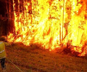 East Coast Bush Fires