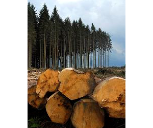 The Forestry Industry Safety Pack is in the final stages of development.