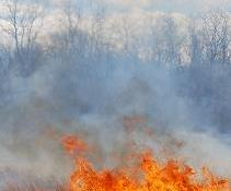 Urgent fire management issues must be raised.