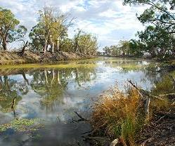 River Red Gums on Monoman Creek, Chowilla Floodplain, River Murray. Image by Ian Overton, CSIRO.