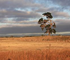 Where is the investment in Australia's farms, and the country's future?